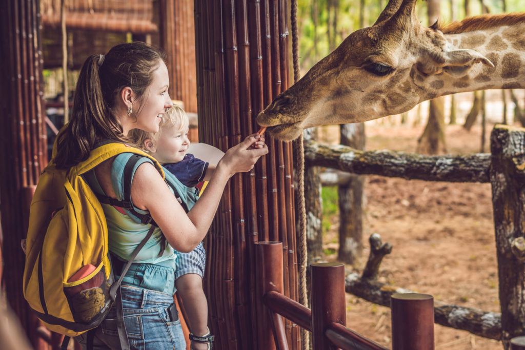 appy mother and son watching and feeding giraffe in zoo. Happy family having fun with animals safari park on warm summer day